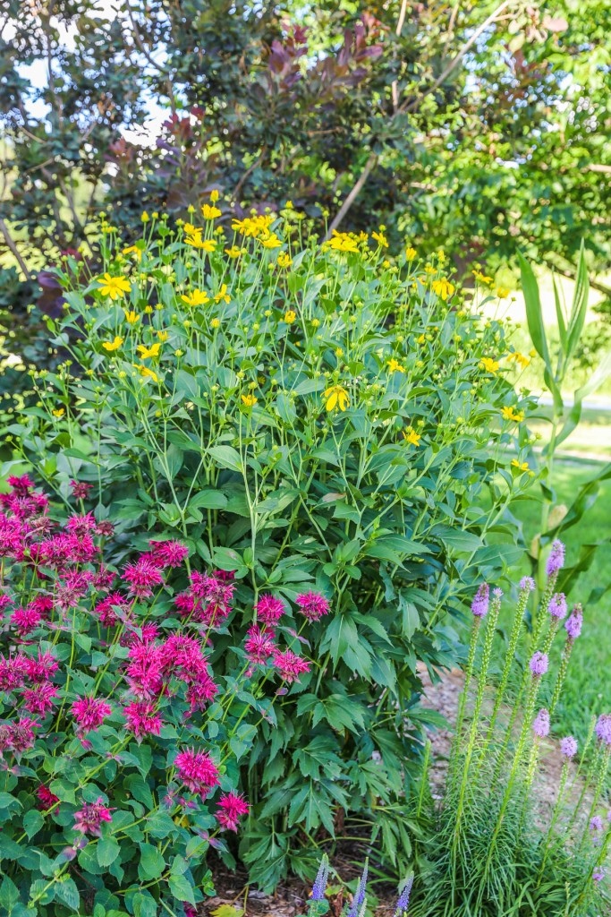 Various types of pollinator friendly plants.
