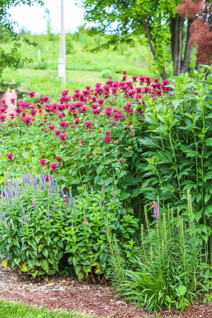 Monarda or bee balm, spike speedwell and liatris.